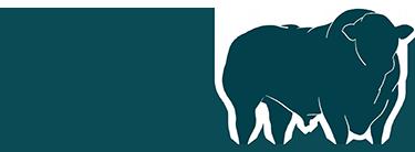 Lissett Limousins | Pedigree Limousin Bulls | East Yorkshire | Limousin
